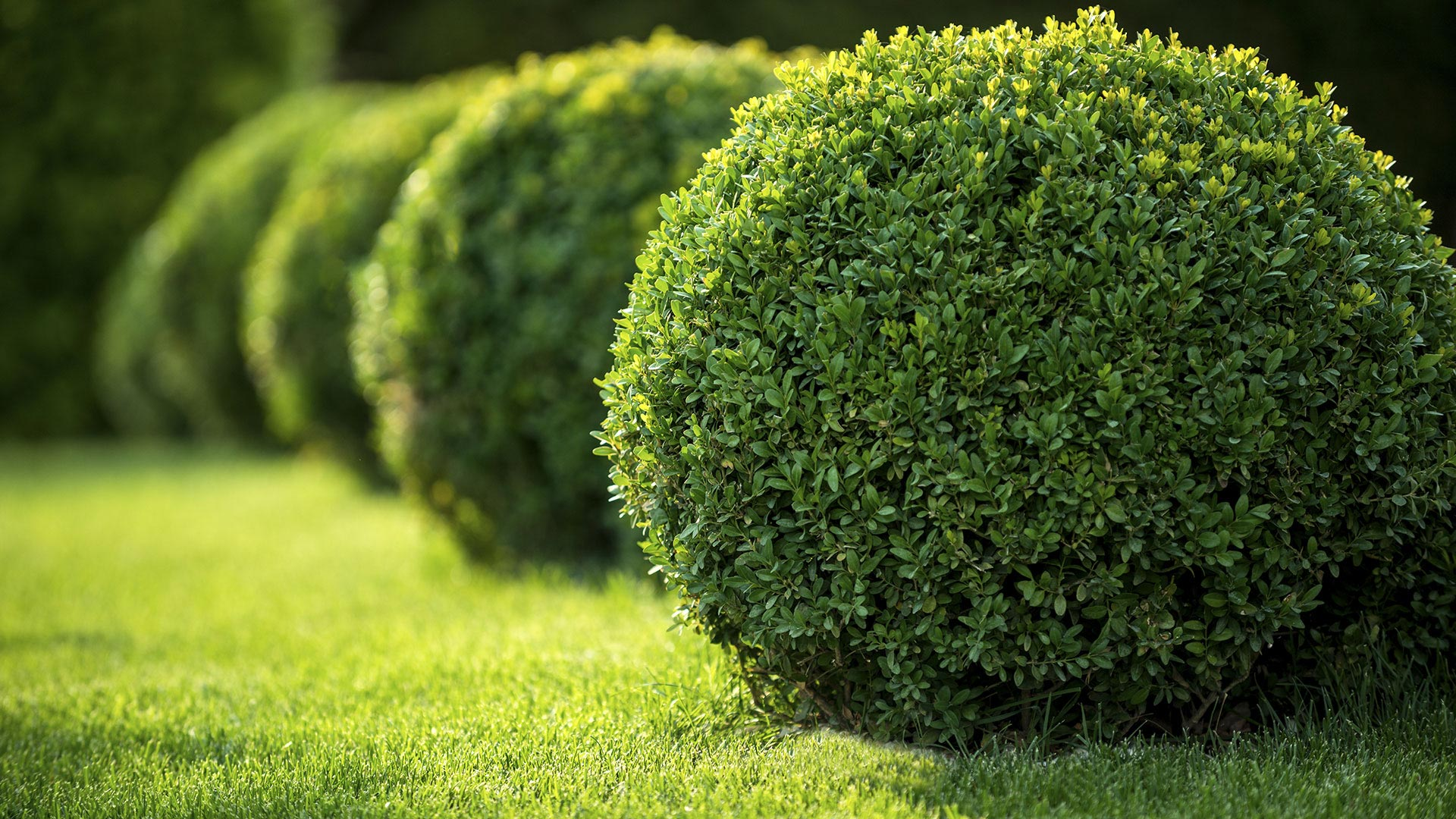J & E Lawn Service LLC Landscaping, Lawn Maintenance and Irrigation slide 1